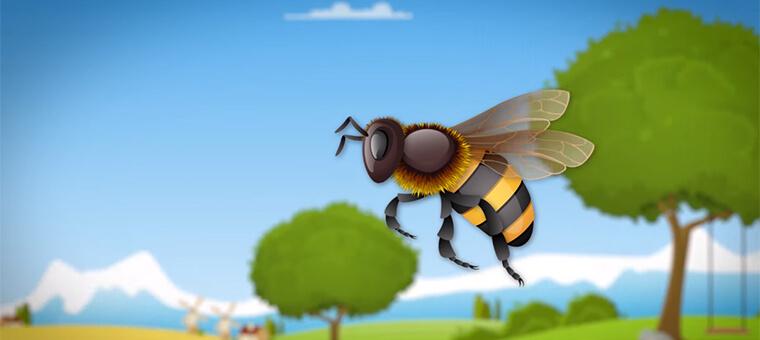 bienen-honig