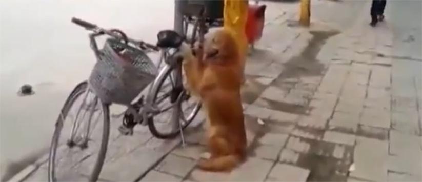 hund-als-fahrradschloss
