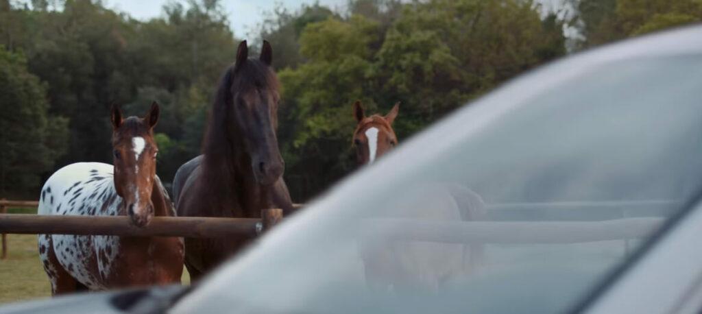 volkswagen-lachende-pferde